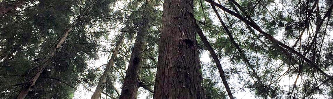 森林組合の定例総会に出席しました